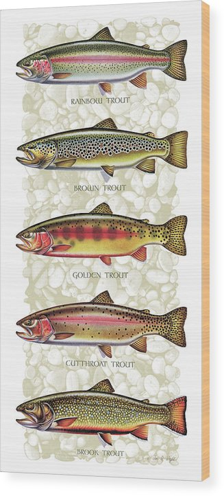 Five Trout Panel Wood Print featuring the painting Five Trout Panel by JQ Licensing