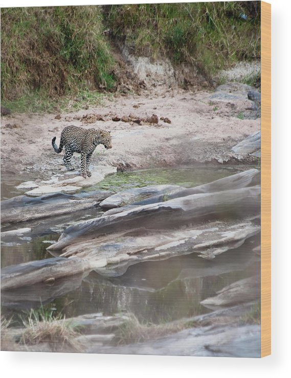 Tranquility Wood Print featuring the photograph A Cheetah Stands At The Edge Of The by Diane Levit / Design Pics