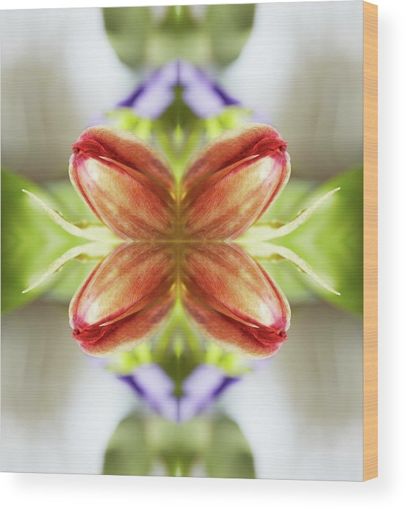 Tranquility Wood Print featuring the photograph Red Tulips by Silvia Otte