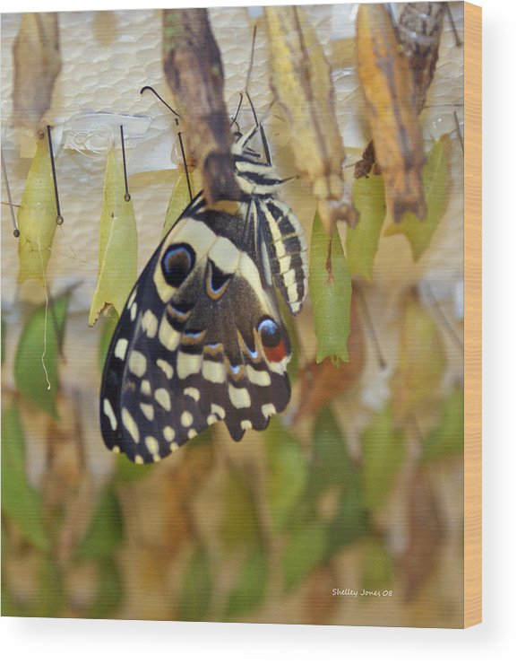 Butterfly Wood Print featuring the photograph And life begins by Shelley Jones