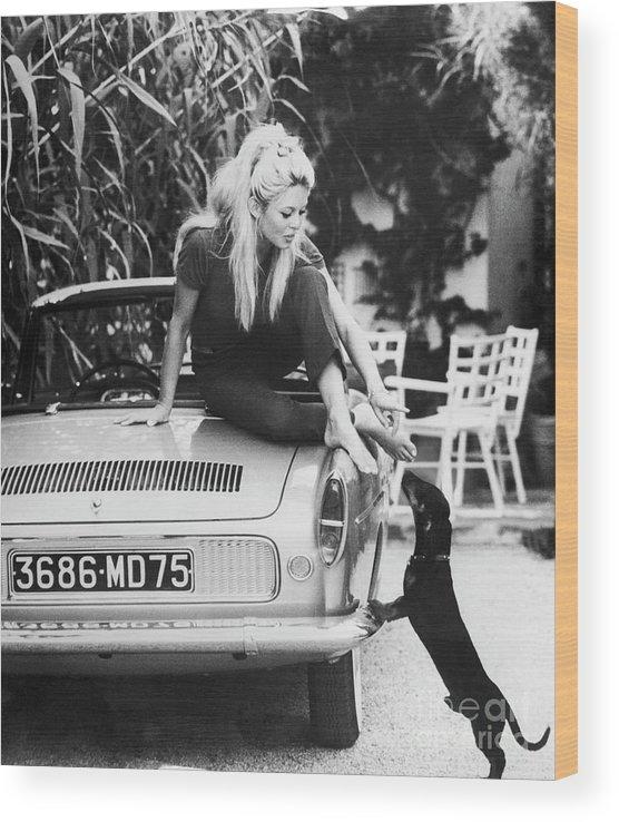 Pets Wood Print featuring the photograph Brigitte Bardot With Dachshund by Bettmann
