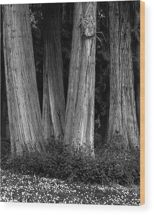 Trees Wood Print featuring the photograph Breadth Of Trees by Sara Absher