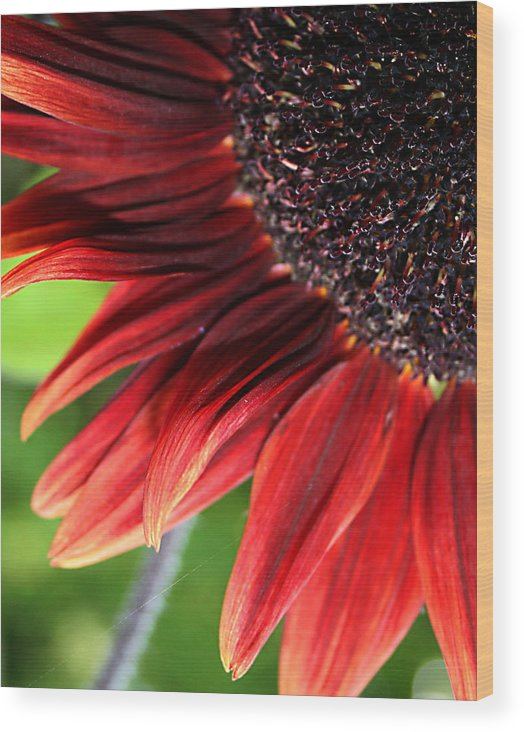 Red Wood Print featuring the photograph Sunflower by Carol Hicks