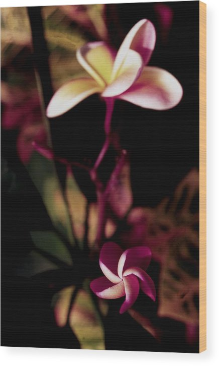 Orchid Wood Print featuring the photograph Peach Pink Orchid by Alfredo Martinez
