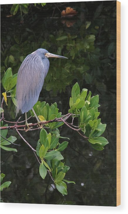 Blue Wood Print featuring the photograph Shades Of Blue And Green by Doris Potter