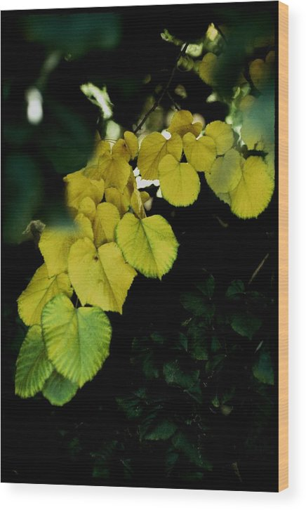 Bright Wood Print featuring the photograph Tree Leaves In Yellow Green by Alfredo Martinez