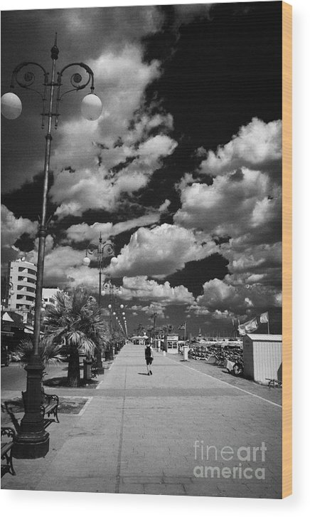 Palm Wood Print featuring the photograph The Palm Tree Promenade Finikoudes On Larnaca Seafront Larnaka Republic Of Cyprus Europe by Joe Fox