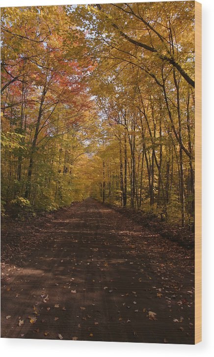 Fall Colors Wood Print featuring the photograph Fall Color Road by Mark A Dolan