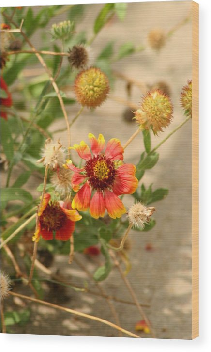 Flower Wood Print featuring the photograph Another Sort by ShadowWalker RavenEyes Dibler