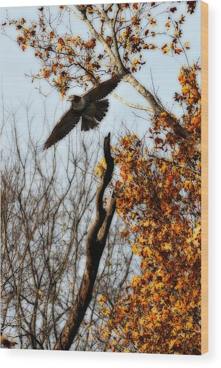 Flight Wood Print featuring the photograph Autumn Flight by Alan Skonieczny