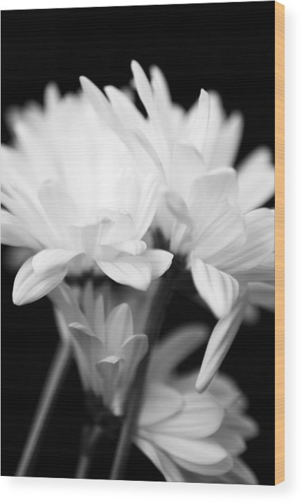 Floral Wood Print featuring the photograph Daises In Black And White by Ayesha Lakes