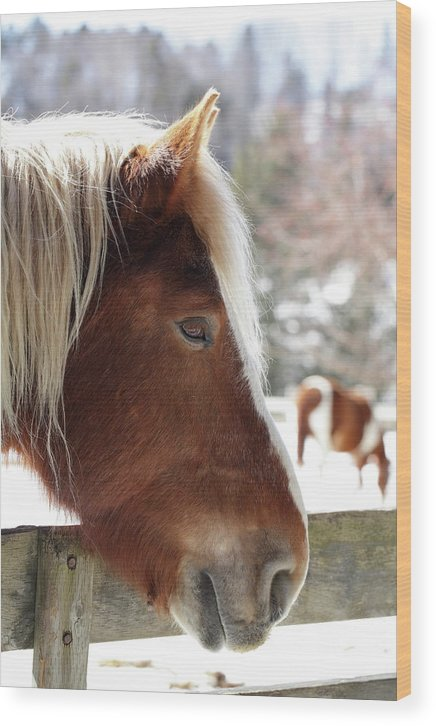 Horse Snow Wood Print featuring the photograph Endless Winter86 Color by Luc Bovet