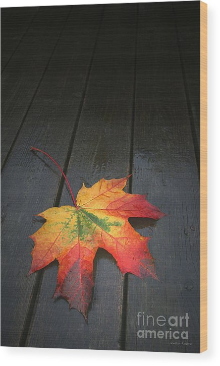Leaf Autumn Fall Rain Color Wood Print featuring the photograph Fall by Winston Rockwell