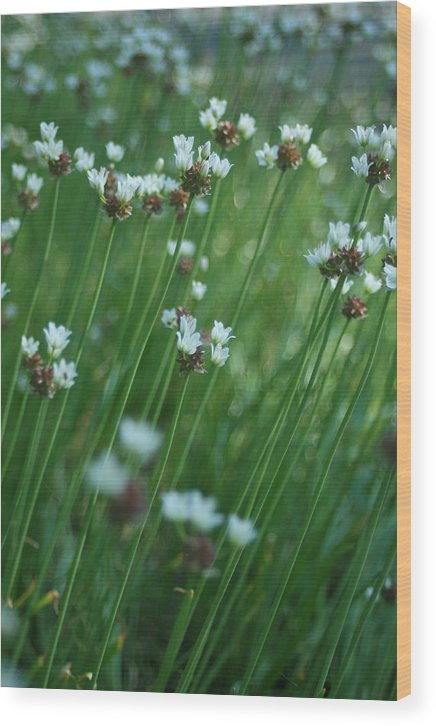 Flowers Wood Print featuring the photograph Field Of Tiny Flowers by Christopher Larimore