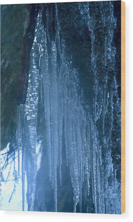 Blue; Close; Cold; Icicle Wood Print featuring the photograph Icicles 5 by John Higby