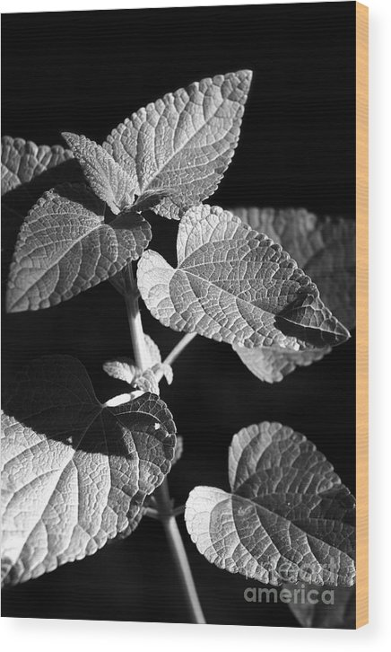 Light Wood Print featuring the photograph Light And Shadow by Jeannie Burleson