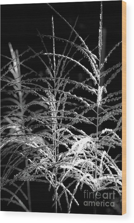 Black & White Wood Print featuring the photograph Light Stripes by Donna Fonseca Newton