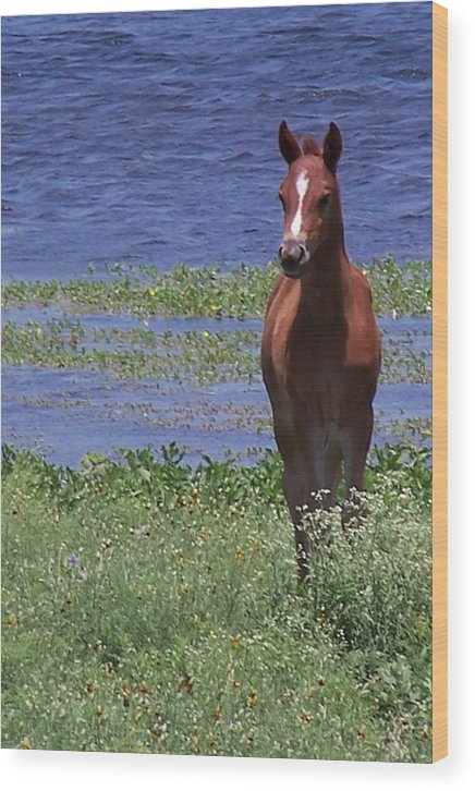 Horse Wood Print featuring the photograph Look At Me by Lilly King