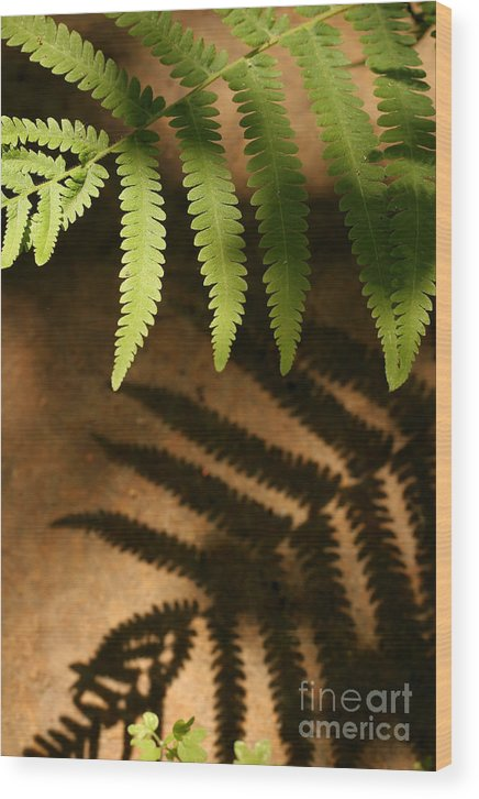 Fern Wood Print featuring the photograph My Shadow by Jeannie Burleson