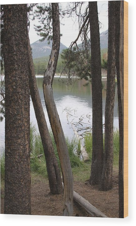 Trees Wood Print featuring the photograph Nature's Frame by Tracy Michicich