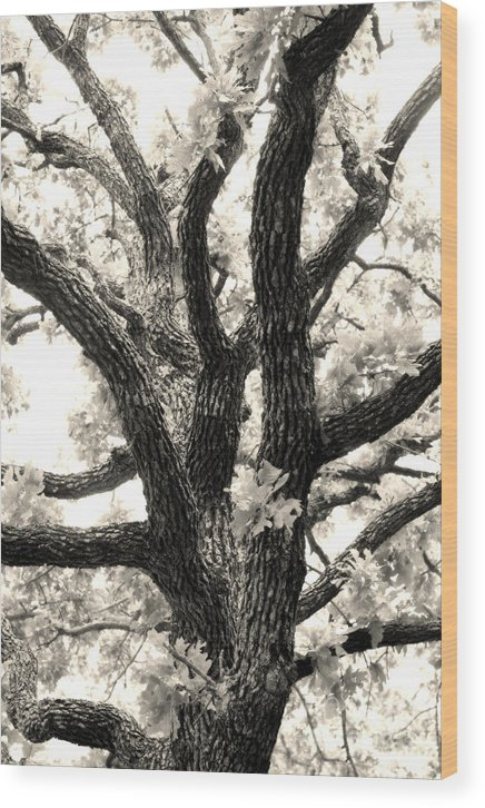 Post Wood Print featuring the photograph Post Oak by Jeannie Burleson