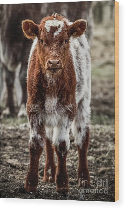 Cinematic Wood Print featuring the photograph Spring Baby by Brad Allen Fine Art