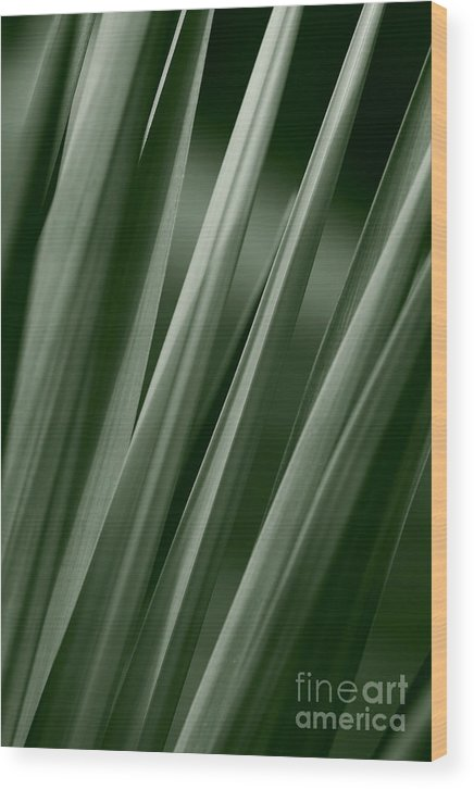 Abstract Wood Print featuring the photograph Yucca Spikes by Jeannie Burleson