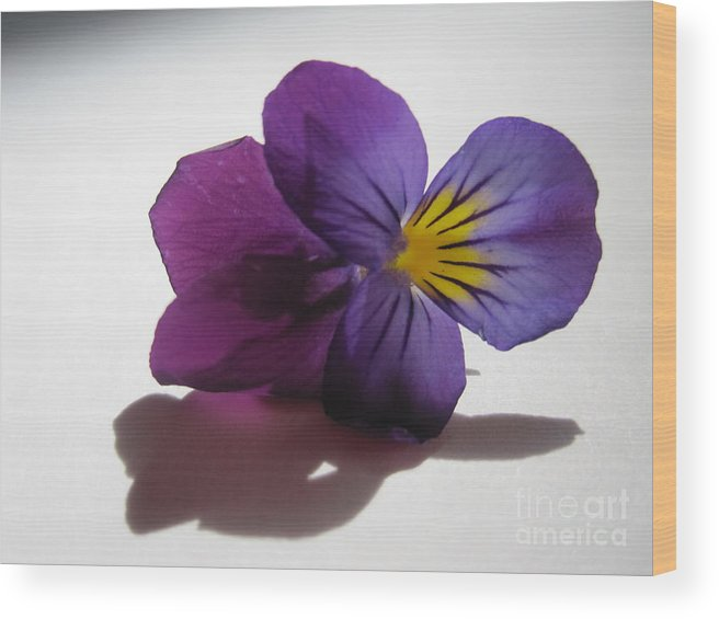Floral Wood Print featuring the photograph Transparency 3 by Tara Shalton