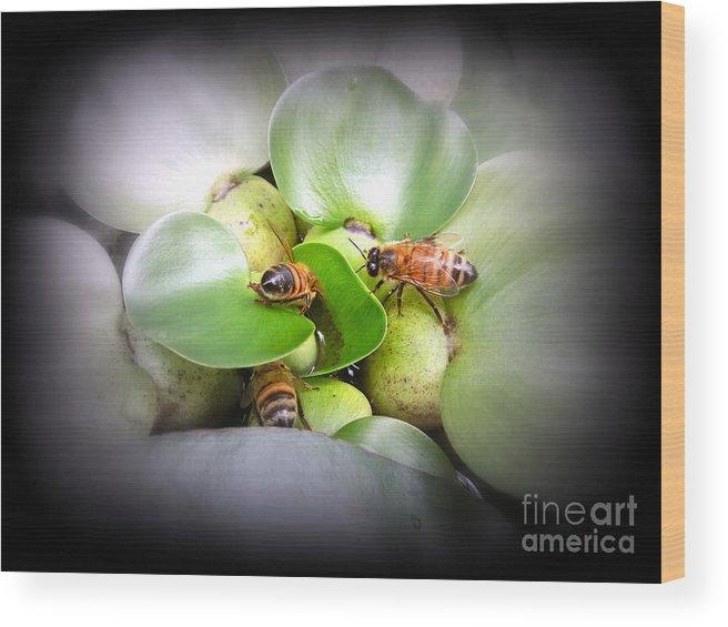 Honey Wood Print featuring the photograph 1 . 2 . 3 . Honeybees by Renee Trenholm