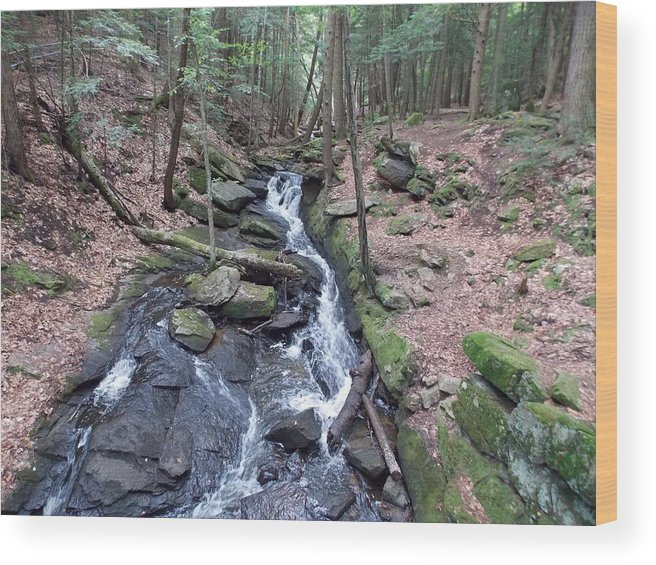 Chesterfield Gorge Wood Print featuring the photograph Chesterfield Gorge by Catherine Gagne