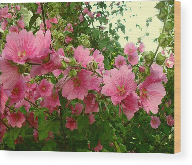 Flowers Wood Print featuring the photograph Floral Splash by Image-in Photoart