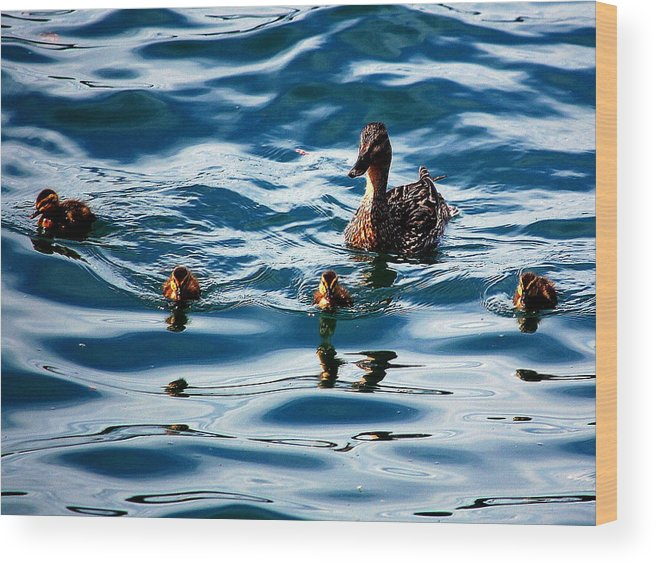Wood Print featuring the photograph Morning Swim by Kim Blaylock