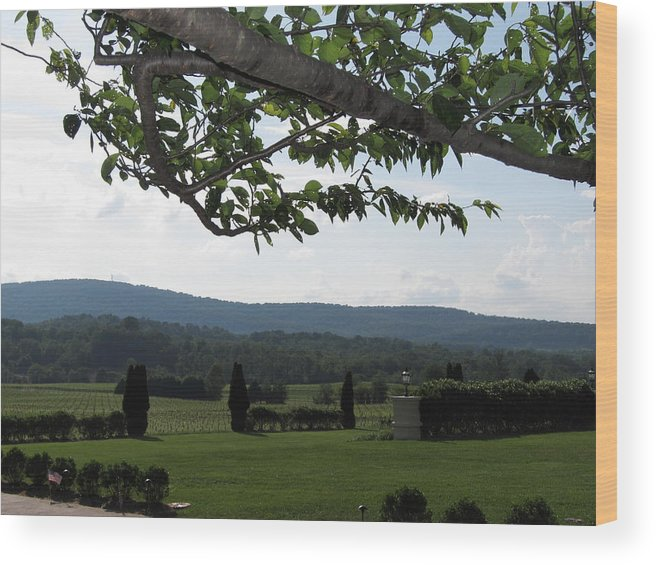 Virginia Wood Print featuring the photograph Vineyards In Va - 12125 by DC Photographer