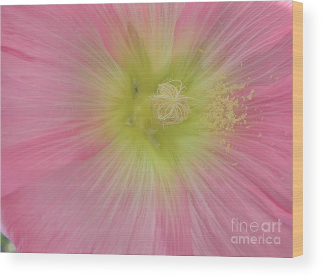 Flowers Wood Print featuring the photograph Loveflowers by Baljit Chadha
