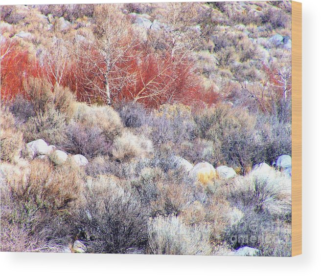 Desert Wood Print featuring the photograph Desert Brush by Marilyn Diaz