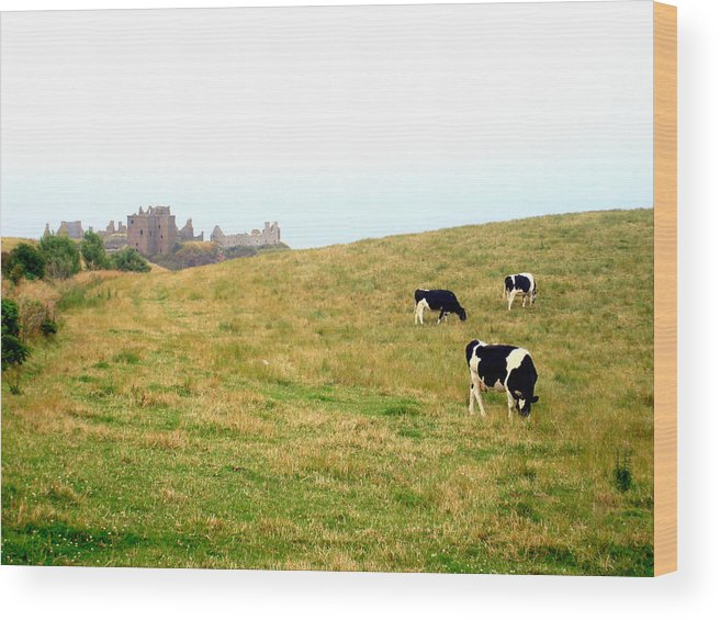 Wood Print featuring the photograph The Cows Of Dunnottar Castle by Penelope Stephensen