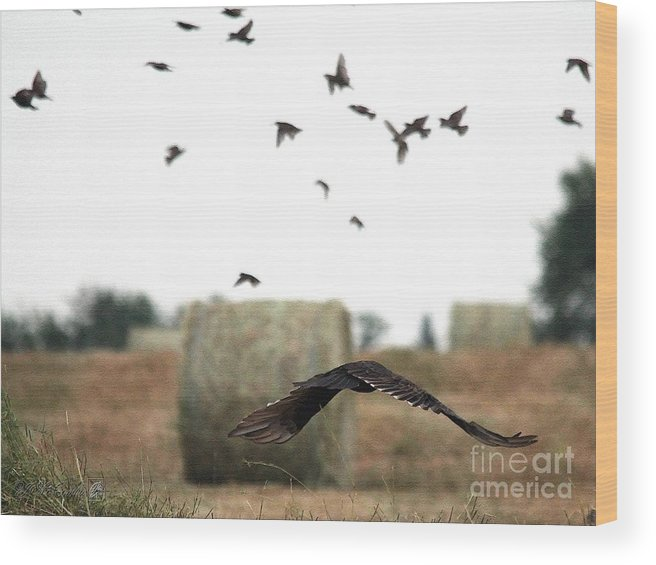 Mccombie Wood Print featuring the painting Turkey Vulture Takes Flight by J McCombie