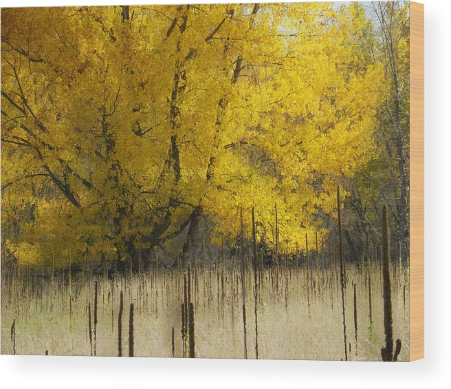 Autumn Wood Print featuring the photograph 2804 by Peter Holme III