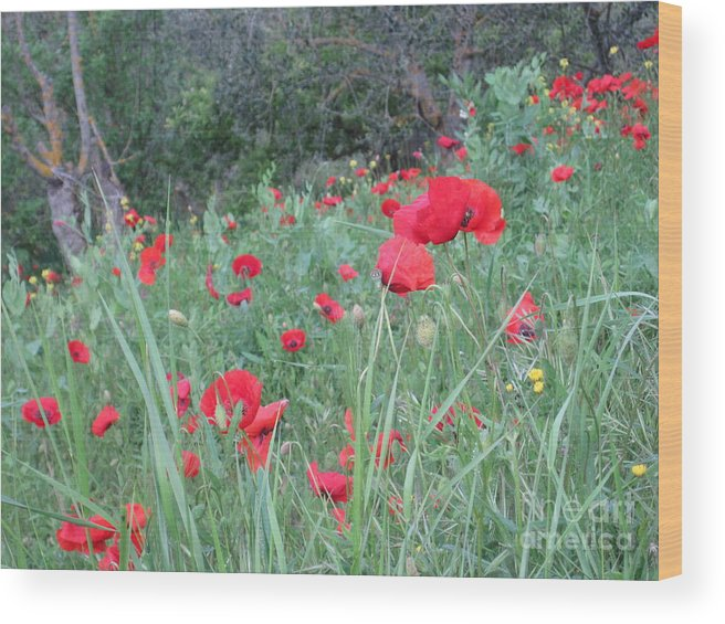 Flowers Wood Print featuring the photograph Italy by Tiffany Reine