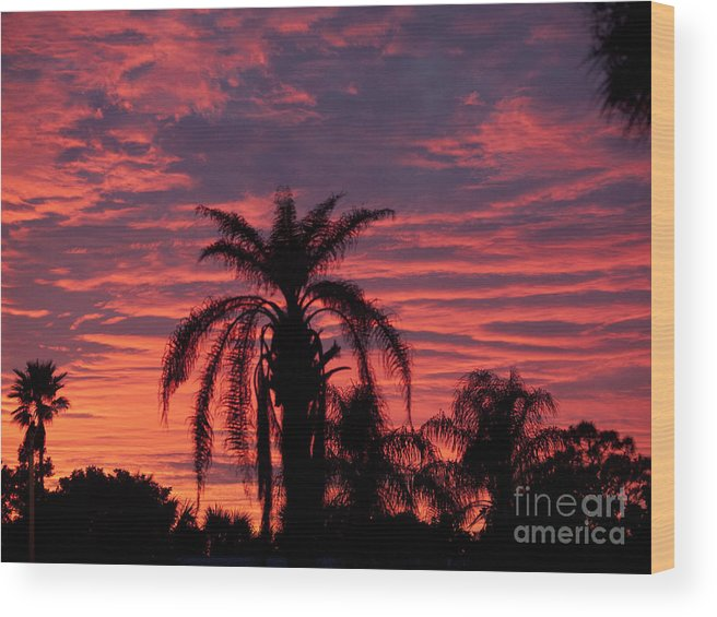 Tropic Wood Print featuring the photograph Florida Sunset by Allan Hughes