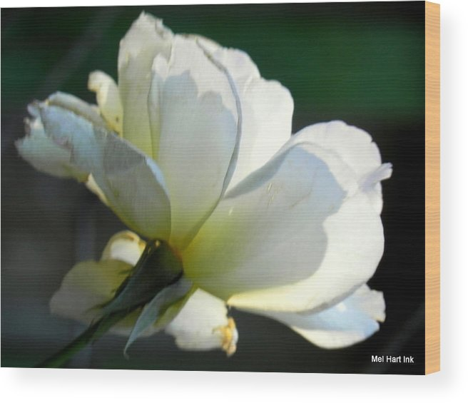 Wood Print featuring the photograph Angel Wings by Mel Hart