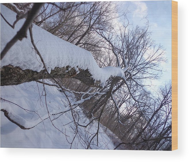 Wood Print featuring the photograph Angled Fallen Tree by Jacque Hudson