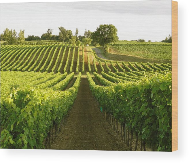Vineyards Wood Print featuring the photograph Armagnac by Michael Urbain