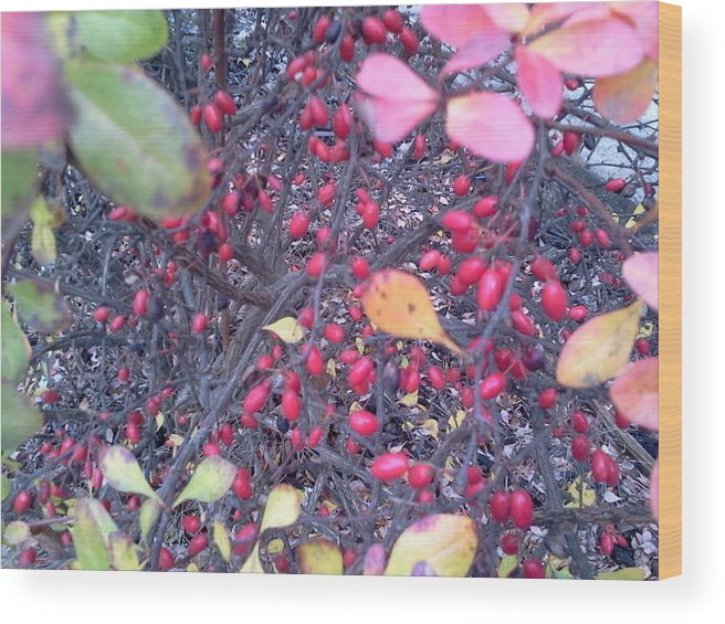 Autumn. Botanical. Bush. Berry.colorful. Wood Print featuring the photograph Autumn Dream by Debbi Saccomanno Chan