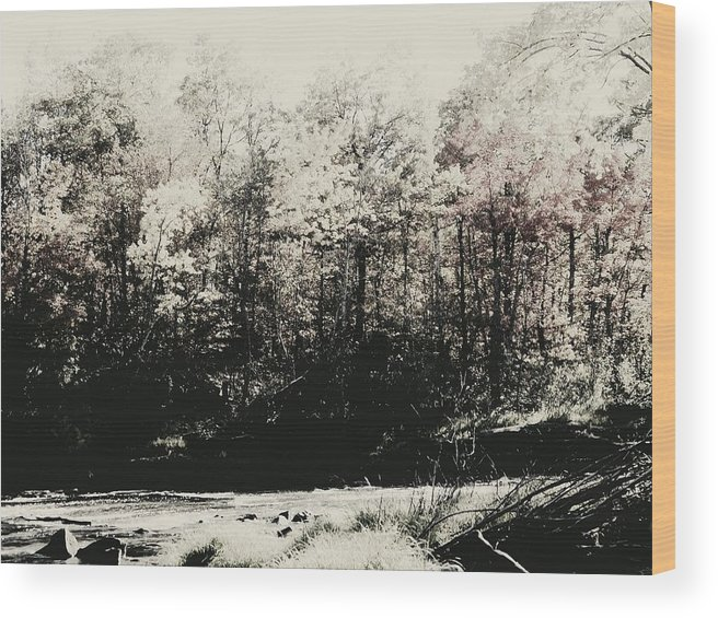 Landscape Wood Print featuring the photograph Banning State Park by Sarah Marie Hiemstra