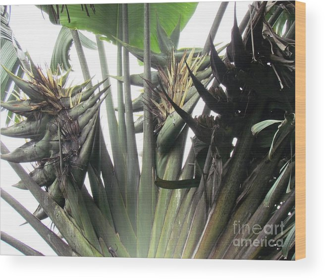 Panama Wood Print featuring the photograph Barrilas Flower by Ted Pollard
