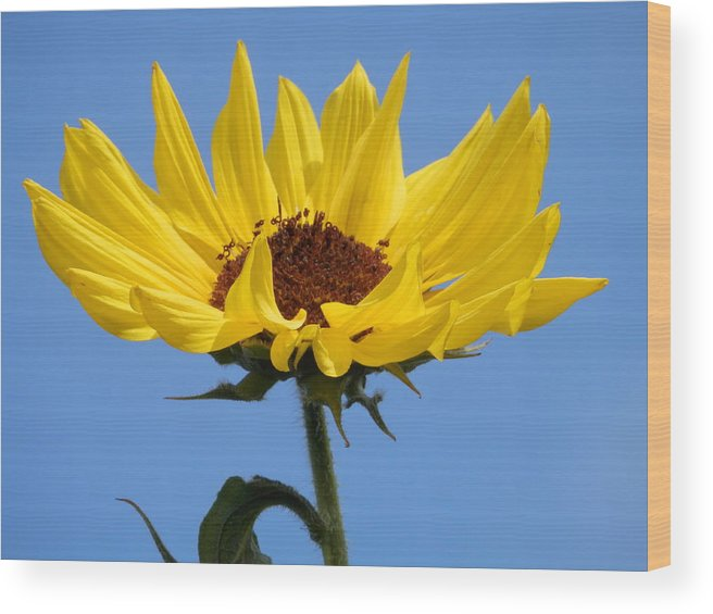 Beautiful Wood Print featuring the photograph Bright Yellow Happy Sunshine by Belinda Lee