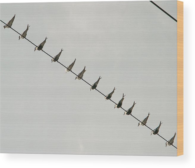 Philippines Wood Print featuring the photograph Birds And Wires Three by Pete Marchetto