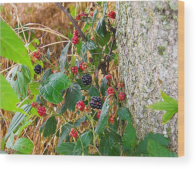 Black Wood Print featuring the photograph Black Berry by Nick Kirby