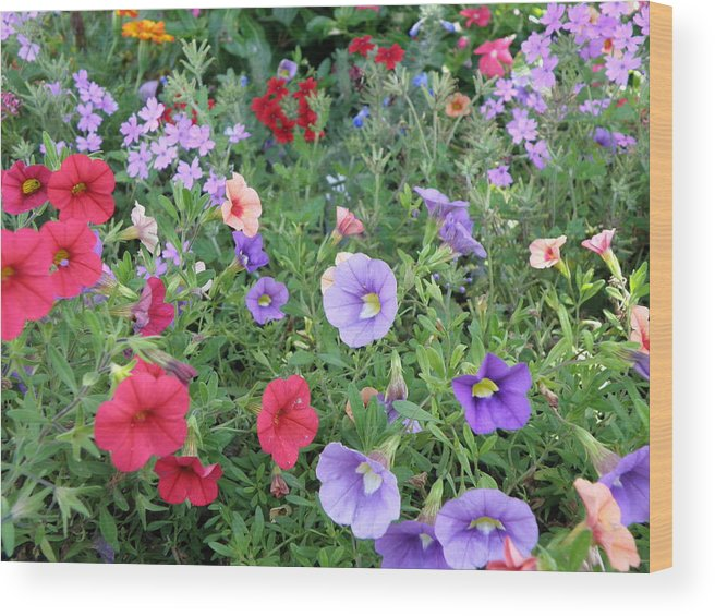 Flowers Wood Print featuring the photograph Blooming Extravaganza by Tina Camacho